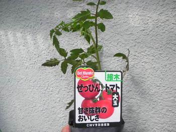 SANY0055.JPG